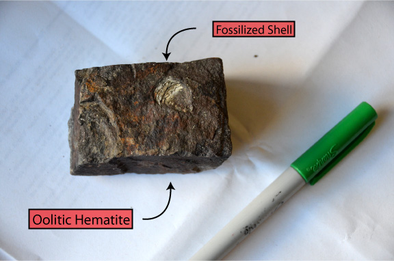 Figure 6: Oolitic Hematite with fossilized shell.