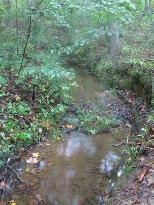 Headwater stream at Crowder Mountain State Park