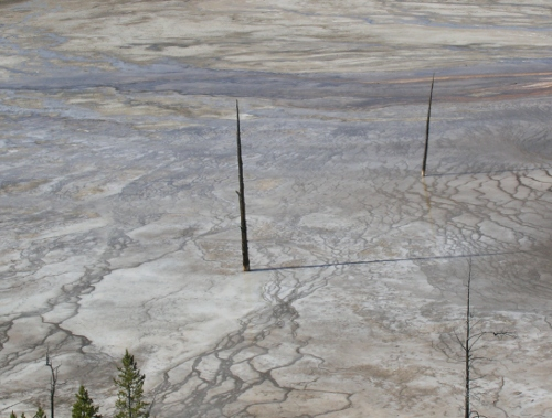 grand prismatic trees