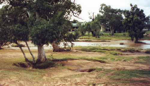 Scour around a riparian tree with the receding Todd River in the background, 23 April 2000 (photo by A. Jefferson)