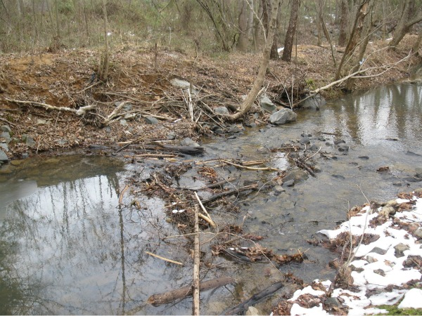 Allochthonous organic material in Clark Creek, Charlotte. High water has washed branches and