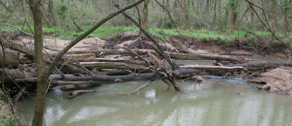 Large wood jam on Mallard Creek, near Harrisburg, NC