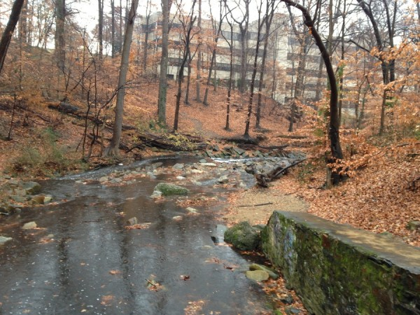 Rocky stream, fallen leaves, and building in the background