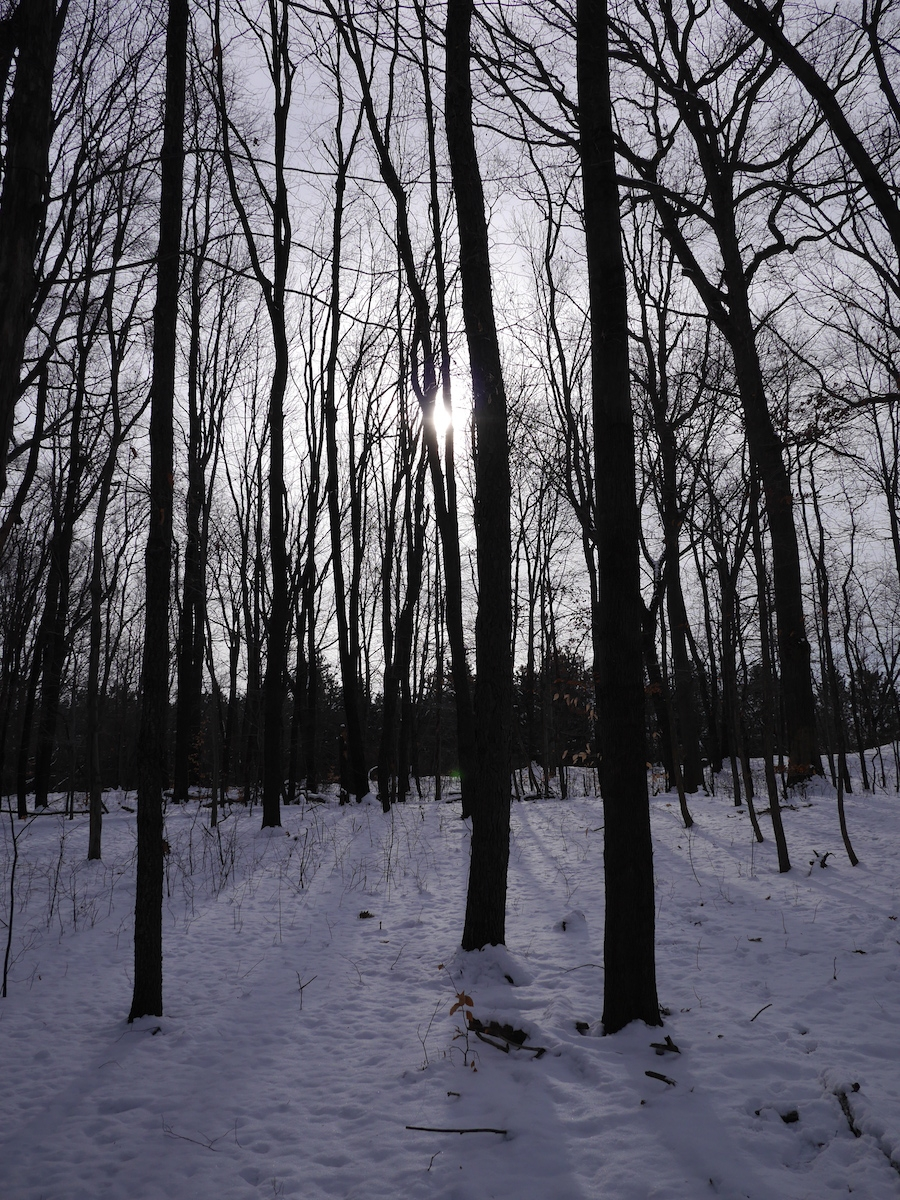 The low sun shining through trees the makes a lovely pattern on the snow. Photo: Chris Rowan, 2013.