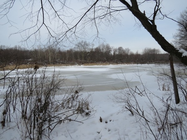 view from edge of ice covered pond