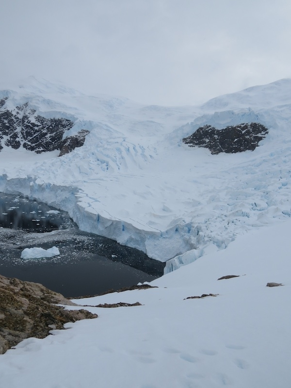 Glacier spilling into a fiord. Glimpses of steep bare rock in foreground and background.
