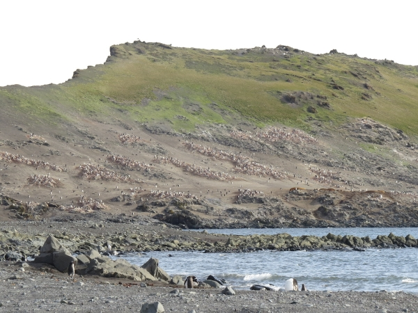 A view towards Hannah Point and its prolific nesting birds. Photo by A. Jefferson.