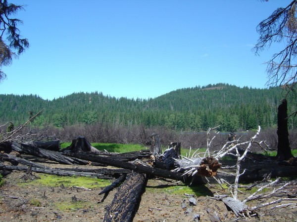 The Lost Lake Cinder cones that produced the flows that probably dammed the paleo-stream that once drained Lost Lake. June 2004. Photo by A. Jefferson, all rights reserved.