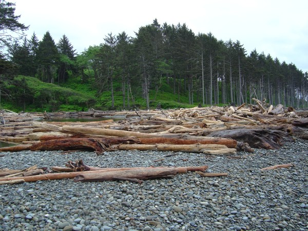 Beach in foreground. Covered in huge logs in midground. Green forests in background.