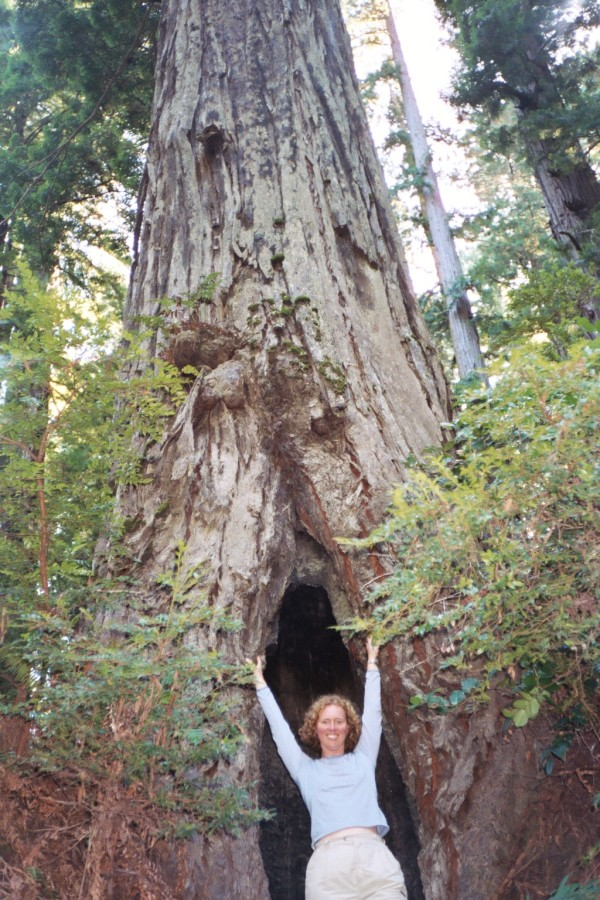Anne reaching up high at the base of a Redwood.