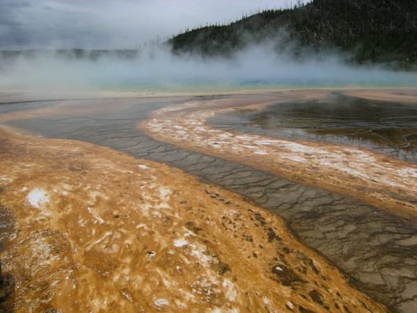 Algal mats at Grand Prismatic Spring