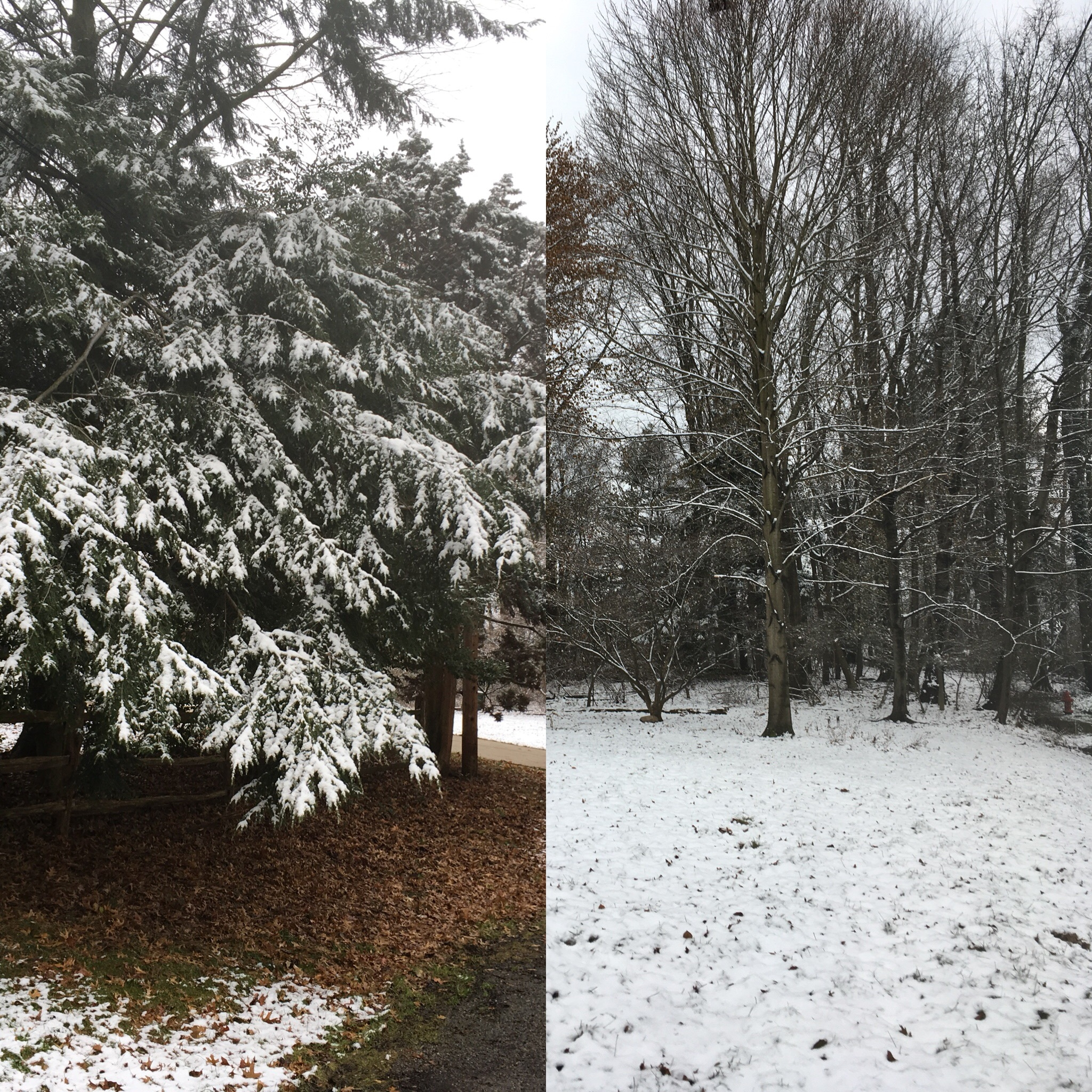 We Still Have Lot Of Snow On Ground But >> Conifers Capture The Snow But Do They Intercept It Highly