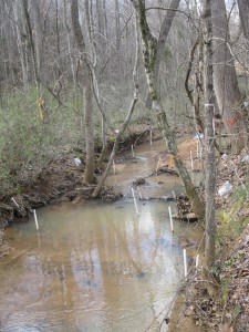 Forested stream with piezometers