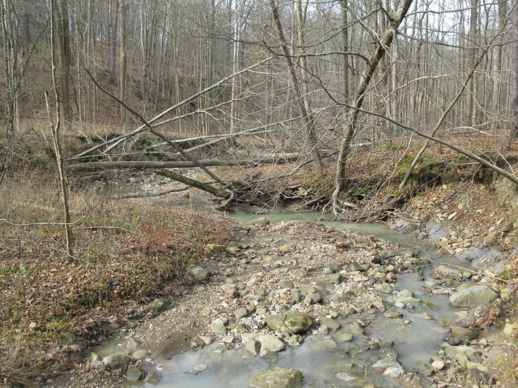 Stream with sediment and trees