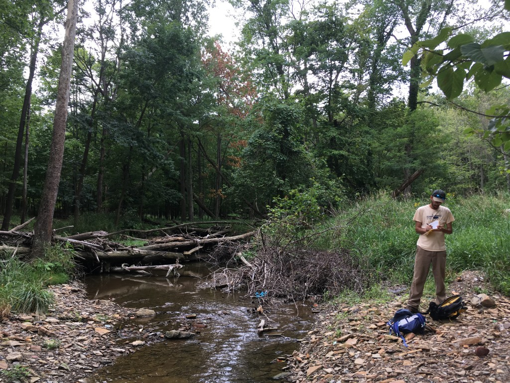 wood jam spanning a stream, man on right side gravel bar looking at something in his hands.