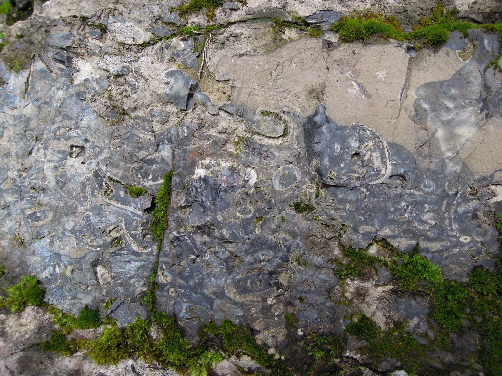 Chert band with fossils